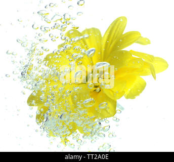 Blume im glitzernden Wasser - Stockfoto