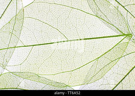Dekorative Skelett Blätter Hintergrund - Stockfoto