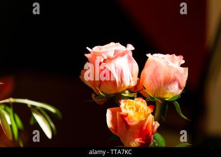 In der Nähe der Rosen auf dem Tisch - Stockfoto