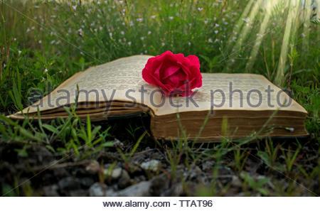Ein altes Buch auf dem Gras, ein als Zeichen des Buches rose. erschwingliche Abdeckung Buchcover, Abbildung: Karte. Eine magische Welt in einem Buch. Es ist eine magische Welt. - Stockfoto