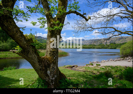 Landale Pikes in Entfernung von Elterwater, Lake District, Cumbria, England - Stockfoto