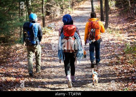 Ansicht der Rückseite des Freunde mit Rucksäcken zu Fuß auf der Straße in den Wald - Stockfoto