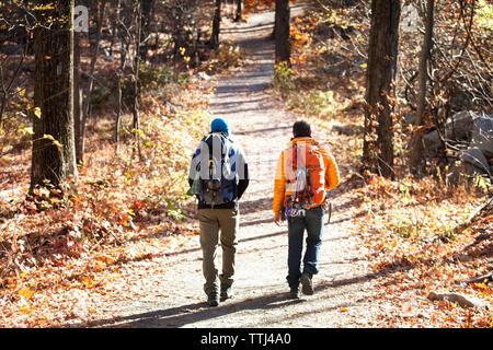 Ansicht der Rückseite des männlichen Freunde mit Rucksäcken zu Fuß auf der Straße in den Wald - Stockfoto