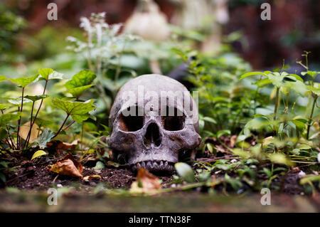 Menschlicher Schädel im Hinterhof - Stockfoto