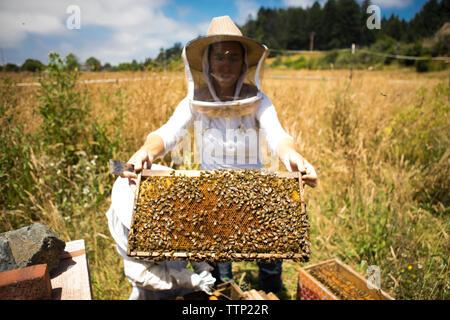 Weibliche Imker holding Honeycomb Rahmen in das Feld - Stockfoto