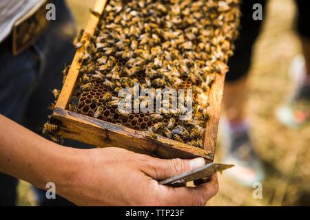 Hohe Betrachtungswinkel der Imker holding Honeycomb Rahmen - Stockfoto