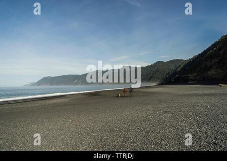 Hohe Betrachtungswinkel der Wanderer mit Rucksack und Hund zu Fuß am Strand gegen Berge und Himmel - Stockfoto