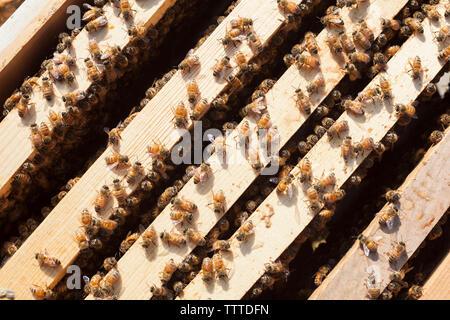 Ansicht von oben der Honigbienen auf Holzrahmen - Stockfoto