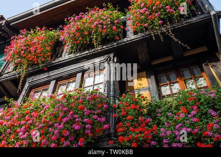 Üppige Blume dekoriert Fachwerkhaus in Eguisheim, Elsass, Frankreich, Holz- haus Fassade und lattice Windows - Stockfoto
