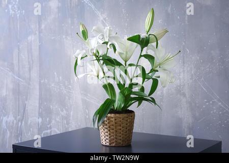 Schöne weiße Lilien im Topf am Tisch - Stockfoto