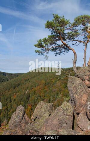 Blick vom Ilsestein in das Ilsetal, Nationalpark Harz, Sachsen-Anhalt, Deutschland - Stockfoto