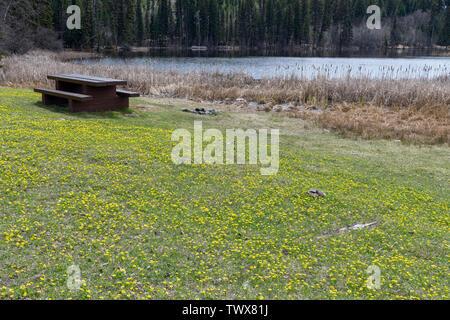 Ein Picknick Tisch unter den gelben Blumen an Isobel Lake in British Columbia, Kanada - Stockfoto