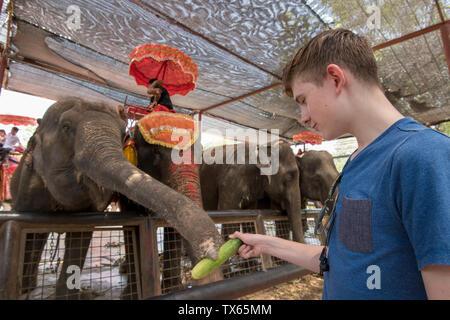 Junge 12 Fütterung der Elefanten in Thailand. - Stockfoto