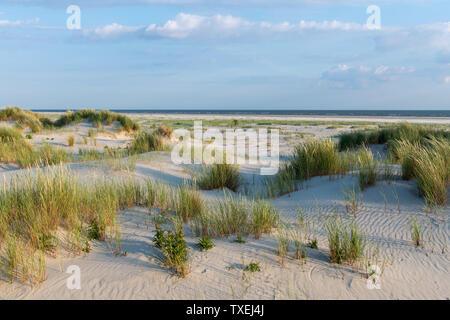 Das grüne Gras bedeckten Sanddünen der friesischen Insel Juist im sonnigen Sommer.