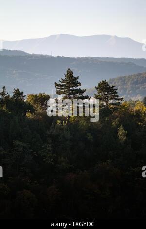 Pinien wit Berg im Hintergrund bei Sonnenaufgang. Am frühen Morgen schoß des Berges Bäume wieder beleuchtet durch die warme Sonne Licht - Stockfoto