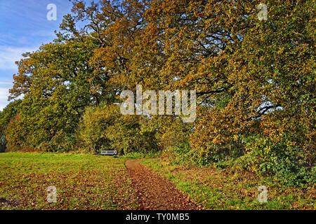 UK, Somerset, Wanderweg um Chard Behälter & Natur finden - Stockfoto