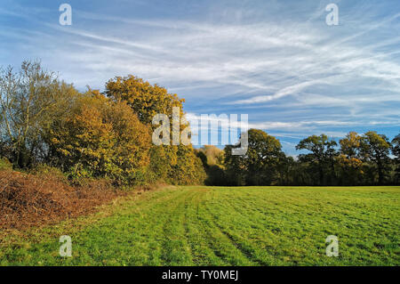 UK, Somerset, Feld um Mangold Behälter & Natur finden - Stockfoto