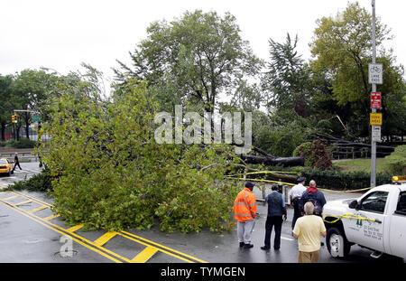 Menschen beobachten ein entwurzelter Baum, der auf Grand Street landete während Hurrikan Irene über Manhattan führt, nachdem er am 28. August 2011 zu einem tropischen Sturm in New York City herabgestuft wird. UPI/John angelillo - Stockfoto