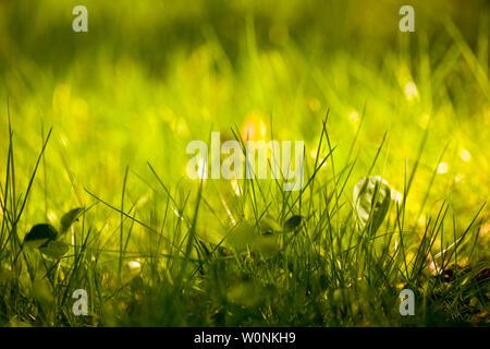 Grüne Gras Makro Hintergrund Fine Art Drucke in hoher Qualität - Stockfoto