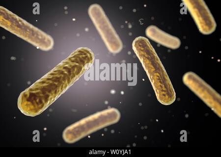 Fecalibacterium prausnitzii Bakterien, Abbildung - Stockfoto