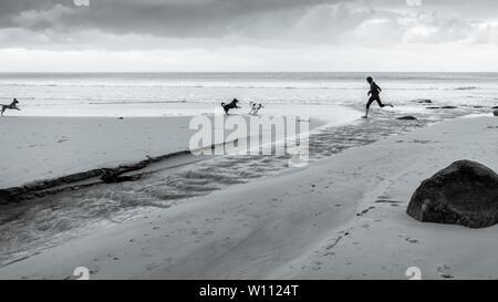 Mit der Hunde Glencairn Strand auf Südafrika der False Bay Küste, in der Nähe von Kapstadt, in den Wintermonaten des Landes - Stockfoto