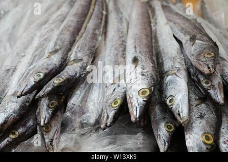 Bringen Fisch. - Stockfoto