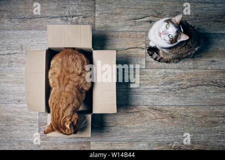 Zwei süße Katzen spielen mit einem cardboartd Box von einem hohen Winkel Aussicht auf einer hölzernen Hintergrund gesehen. - Stockfoto