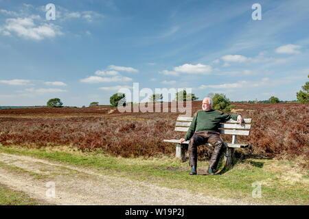 Ein Wanderer nimmt einen Bruch auf einer Holzbank in der Lüneburger Heide. Das Naturschutzgebiet ist ein ideales Wandergebiet. Markierte Wanderwege führen durch die Landschaft. - Stockfoto