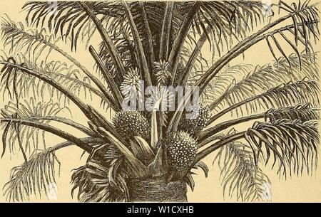 Archiv Bild von Seite 79 der Loango-Expedition ausgesandt von der Sterben