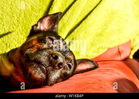 Black Dog - traurig Rescue Dog wartet auf seinen Besitzer zurück zu kommen und ihn abholen - Stockfoto