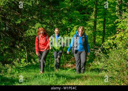 Drei Personen wandern durch Wald, Feldberg, Albsteig, Schwarzwald, Baden-Württemberg, Deutschland - Stockfoto