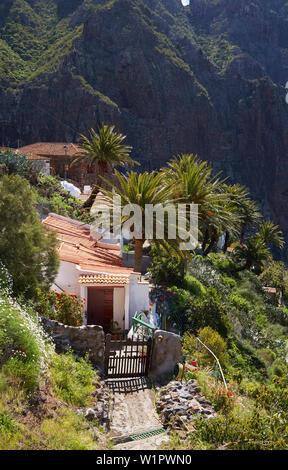 Blick über üppige Vegetation auf Masca, Teno Gebirge, Teneriffa, Kanarische Inseln, Islas Canarias, Atlantik, Spanien, Europa - Stockfoto