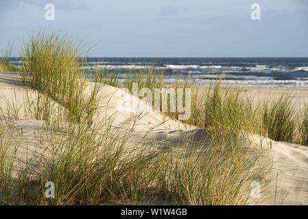 Sanddünen im Morgenlicht, Spiekeroog, Deutschen Nordsee, Nationalpark Wattenmeer, Ostfriesland, Niedersachsen, Deutschland - Stockfoto