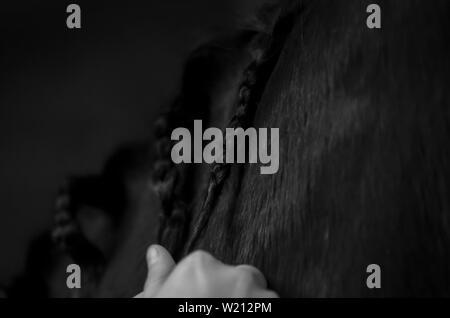 Entfernen von Litzen in von einem Pferd Mähne - Stockfoto