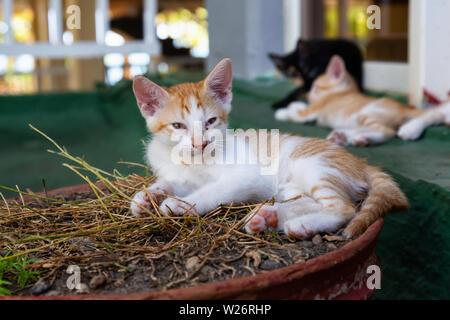 Süße kleine Kätzchen schlafen. In Trinidad, Kuba genommen. - Stockfoto