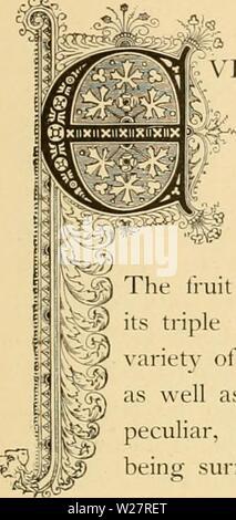 Archiv Bild ab Seite 310 der Cyclopedia von praktische Blumenzucht (1884) - Stockfoto