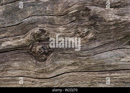 Eine Nahaufnahme eines alten gefallenen Baumstamm, jetzt Grau/Grau und rissig. - Stockfoto