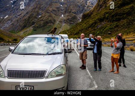 Die Besucher nehmen Fotos Der Gebirgspapageien (Kea Vögel) am Eingang des Homer Tunnel, Fiordland National Park, South Island, Neuseeland - Stockfoto