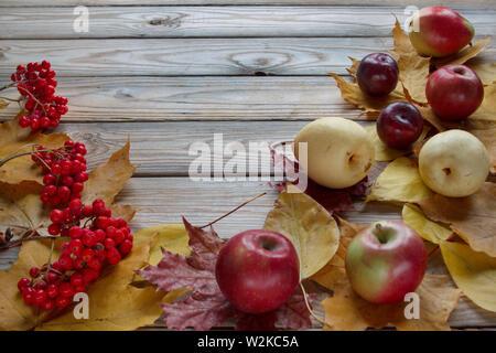 Herbst Blätter, Zweige der Vogelbeere und verschiedene Früchte liegen auf einem Schreibtisch aus Holz. Herbst noch leben. Kopieren Sie Platz für Ihren Text. - Stockfoto