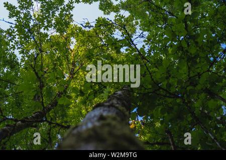 Nachschlagen im Wald - Stockfoto