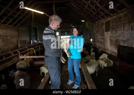GRUNDARFJORDUR, ISLAND - 19. MAI 2019: Der Bauer mit einem neugeborenen Baby isländische Schafe zu einer touristischen Mädchen in einem Stall - Stockfoto