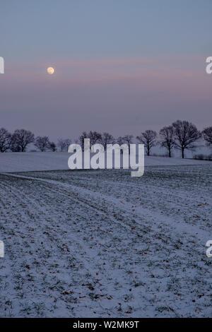Mond über verschneite Feld und Zeile des kahlen Bäume auf einem stimmungsvollen Abend, Schleswig-Holstein, Deutschland