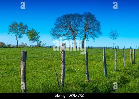 Frankreich, Auvergne, Cantal, Landschaft im Frühling, in der Nähe von Parlan.
