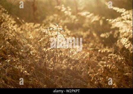Die Textur der Gras, Kräutern. Eng. Bauernhof und Botanik. - Stockfoto