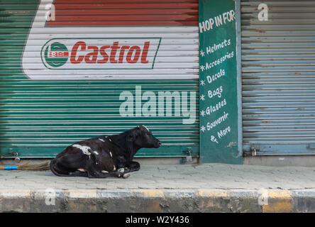 Kuh liegt außerhalb einer Garage auf einer Straße in Kathmandu - Stockfoto