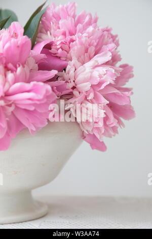 Rosa pfingstrose Blüten in einer weißen Schüssel auf einem weißen Tisch. Weißer Hintergrund. Immer noch leben. Licht am Morgen Licht im Innen weiss.