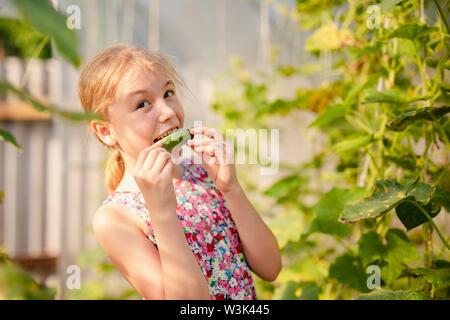 Adorable kleinen Mädchen sammeln Erntegut Gurken und Tomaten im Gewächshaus. - Stockfoto