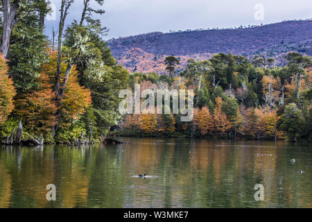 Captren Lagune im Herbst Jahreszeit, eine bunte Spiegel über die Gewässer mit erstaunlichen Reflexionen der Wolken voller Farben mit den Bäumen Laub - Stockfoto