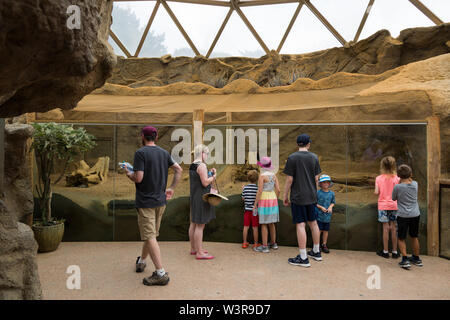 Besucher versammeln sich die Erdmännchen Exponat auf der Indianapolis Zoo zu sehen. - Stockfoto