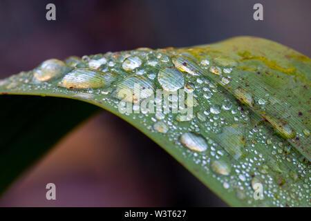 Wassertropfen auf einem grünen Blatt in einem Garten - Stockfoto